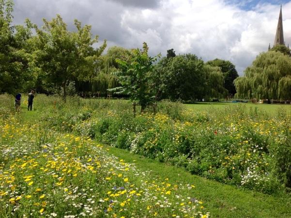 wildflower meadow lr 2